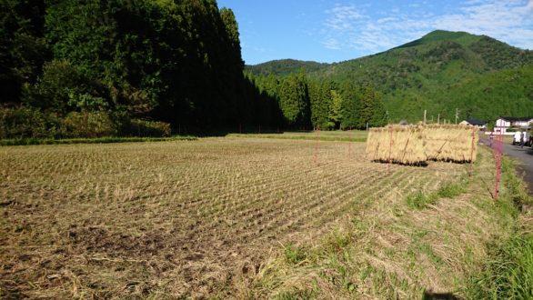 京都美山 稲刈り