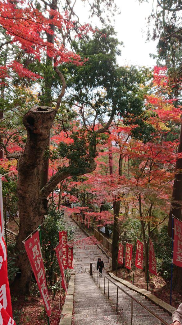 京都山科 毘沙門堂門跡 紅葉狩り