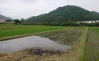 令和2年度の米作り始動