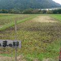 京都美山の米作り